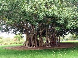 Vastu for Trees and Plants   Vastu   Vastu Shastra   Vastu Tips